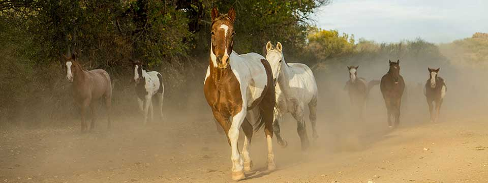 Circle Z Ranch Horse Herd