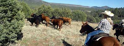 Arizona Dude Ranch Specials - Cherry Creek Lodge Horseback Riding