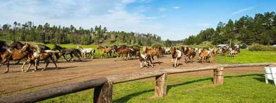 Arizona Dude Ranch Specials - Horses at Sprucedale Ranch