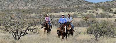 Ranch de la Osa Horseback Riding