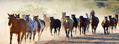 Rancho de los Caballeros horses